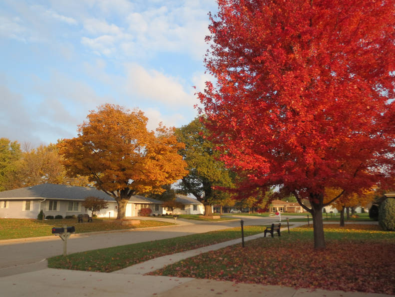 Maple Street's beautiful colors of fall!